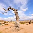 Tabernas Wüste